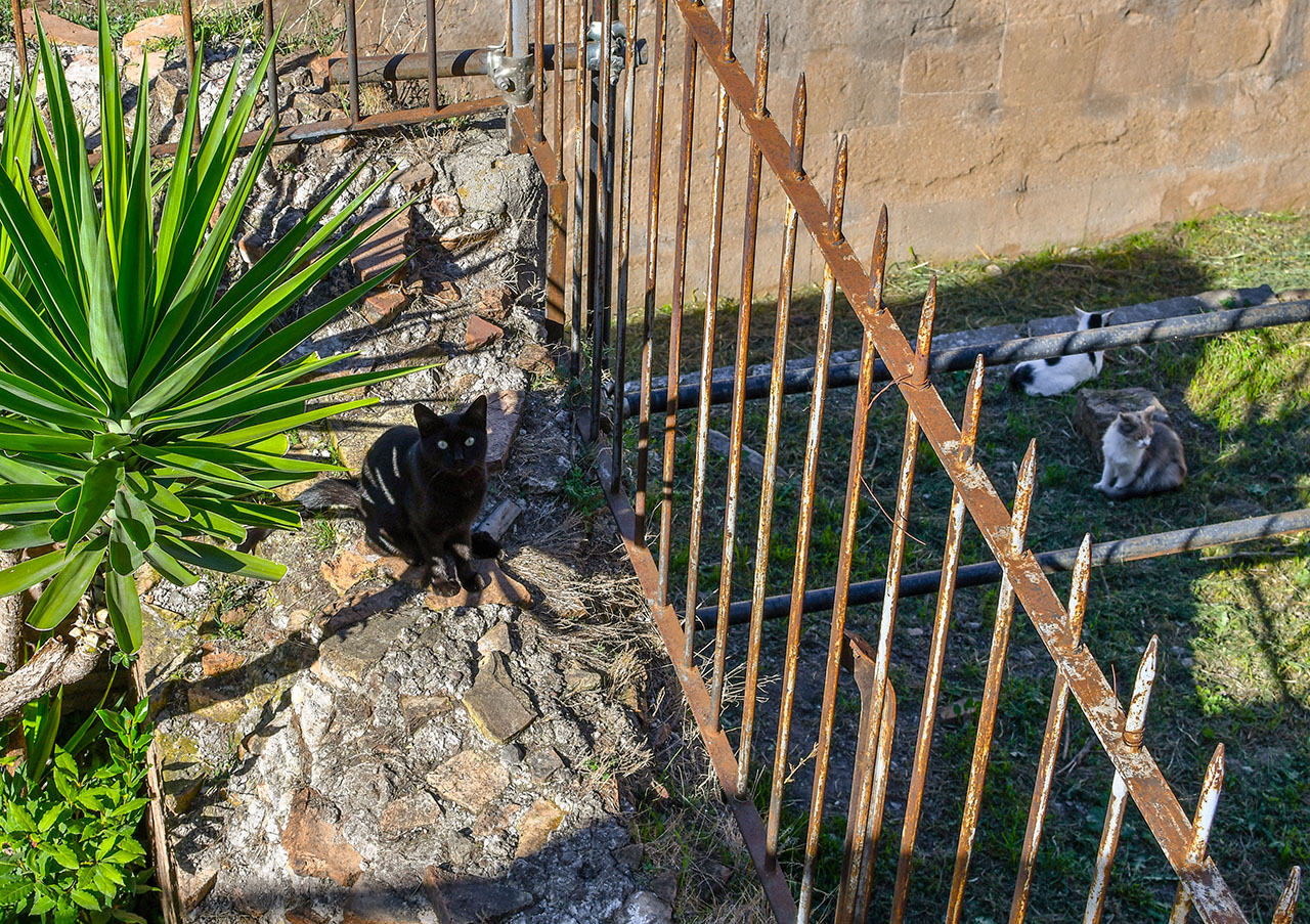 Torre Argentina Black Cat