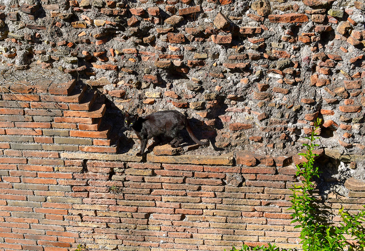 Black cat on a brick wall