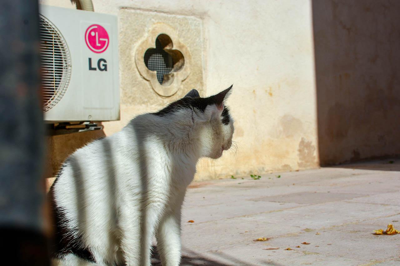 black white cat dubrovnik