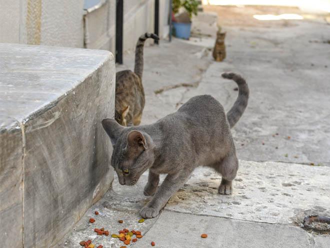 athens cats