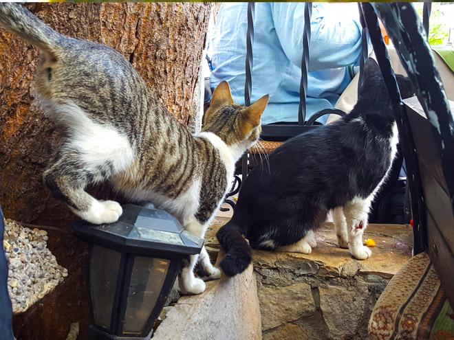 mostar cats