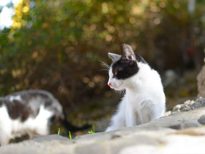 split cats